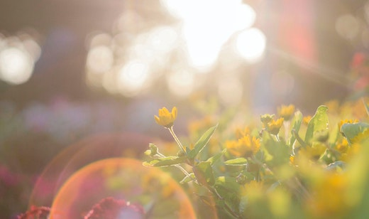 Was ist deine innere Sonne und wie richtest du dich ihr entgegen