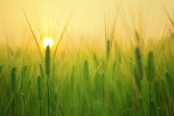 Innere Sonne und damit Glück finden Backnang