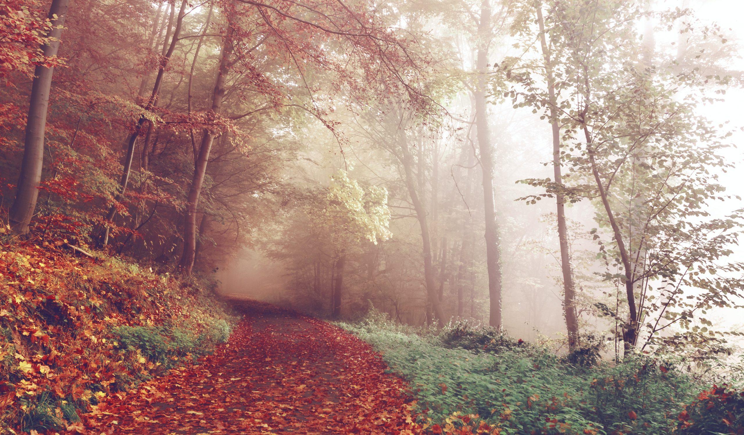 spazierengehen-ein-fest-für-alle-sinne